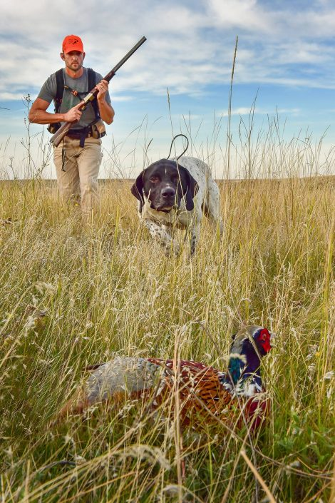 Editorial Photography ~ Upland bird hunting, Montana. Copyright, Darrin Schreder